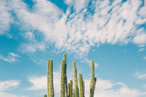 Green Cactus Photo