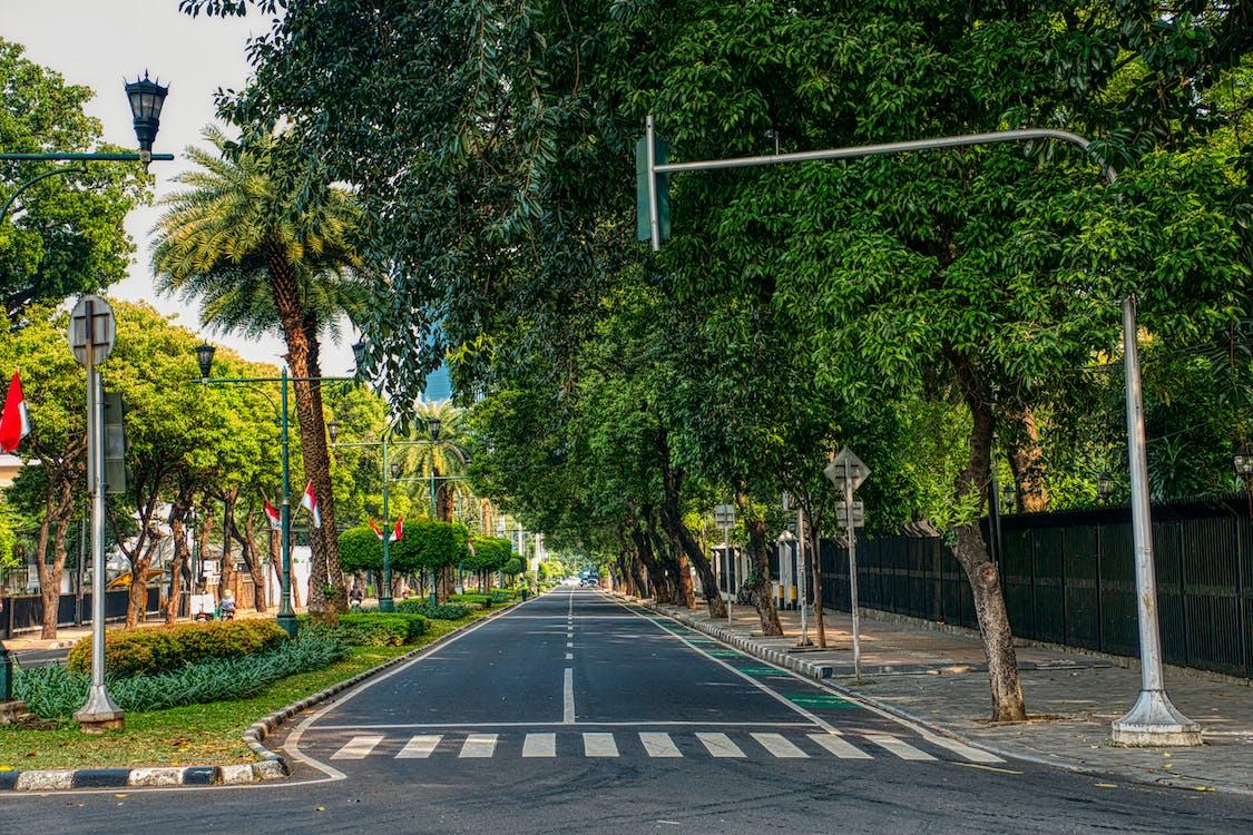 Road Beside Trees And Sidewalk