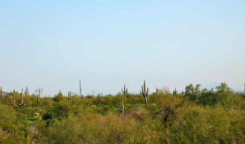Foto stok gratis alam, kaktus, lansekap