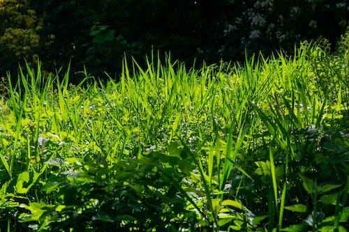 Free stock photo of grass, grass field, green field, meadow