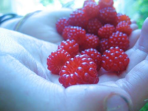 çalı meyveleri, lezzetli, meyve içeren Ücretsiz stok fotoğraf