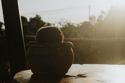 Ingyenes stockfotó álló kép, árnyék, csendélet, cserép témában
