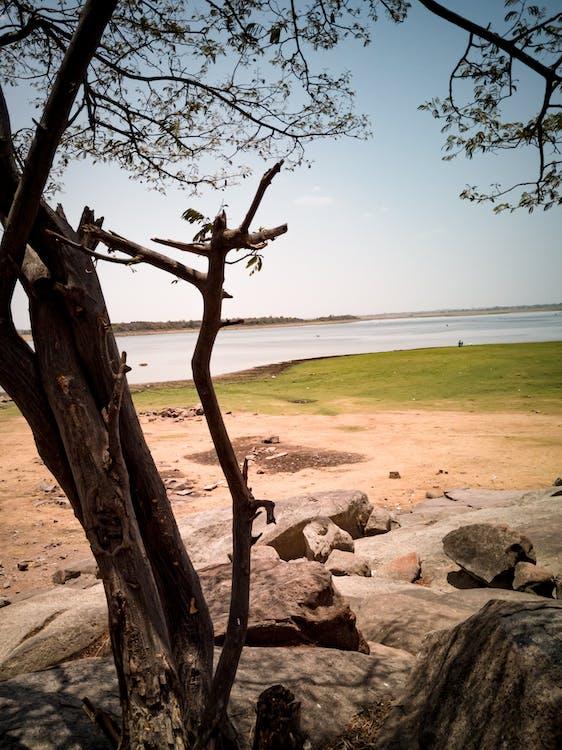オープンフィールド, 写真撮影, 湖沼の無料の写真素材