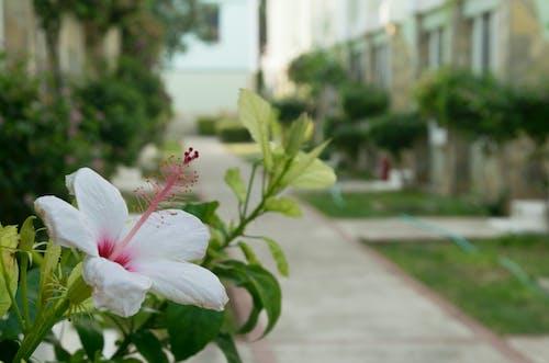 Ilmainen kuvapankkikuva tunnisteilla hotelli, ikkunat, kasvit, kaunis kukka