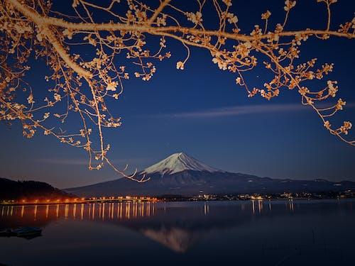 Бесплатное стоковое фото с ветви деревьев, вечер, вид, вода