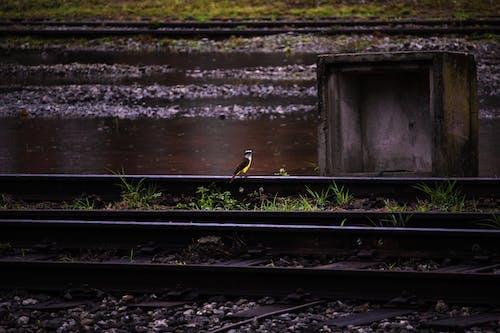 Gratis lagerfoto af fugl, regn, tog, togspor