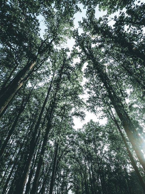 Ingyenes stockfotó alacsony szögű felvétel, erdő, fák, hajnal témában