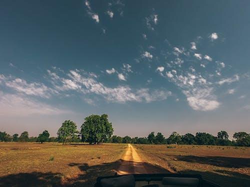 光, 增長, 夏天, 天性 的 免费素材照片