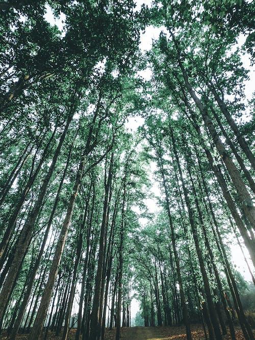 Základová fotografie zdarma na téma denní světlo, kmeny stromů, krajina, les