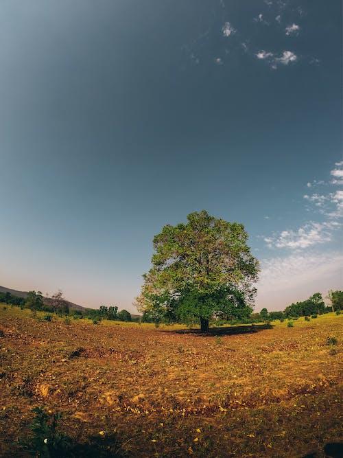 Imagine de stoc gratuită din arbore, calm, câmp, cer albastru