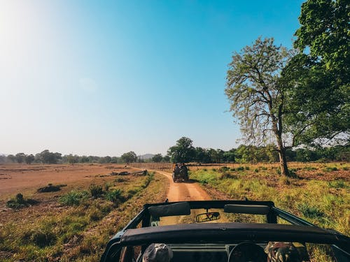 Foto profissional grátis de ação, árvores, automobilístico, aventura
