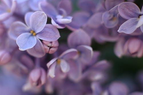 Fotobanka sbezplatnými fotkami na tému farba, farby, krásny kvet, kvet