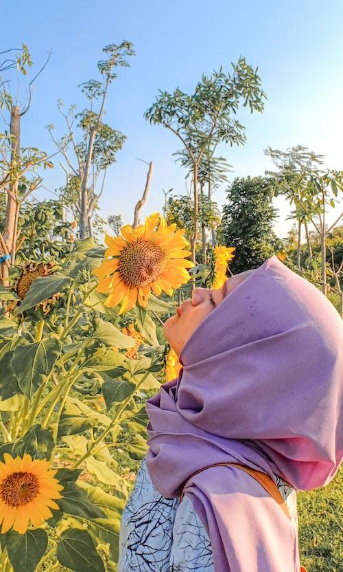 Fotos de stock gratuitas de amarillo, campo de girasoles, chavalas, flor de verano
