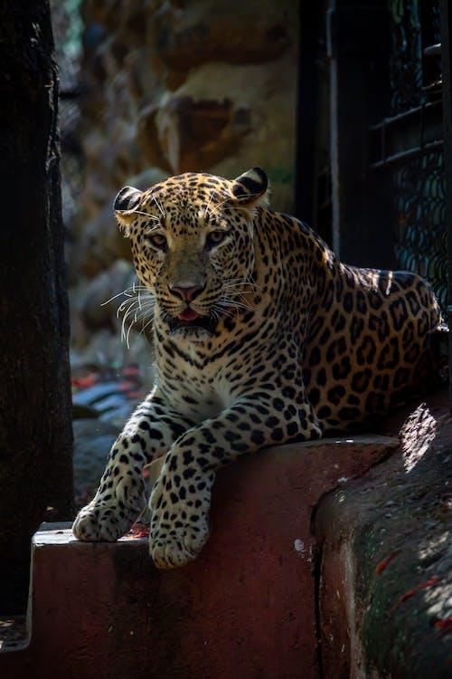 Gratis lagerfoto af dagslys, dyr, dyrefotografering, dyreliv