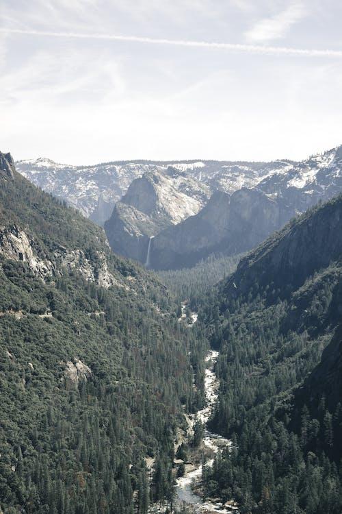 Darmowe zdjęcie z galerii z canon, góry, kalifornia, las