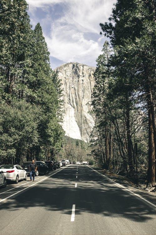 Darmowe zdjęcie z galerii z asfalt, droga, drzewa, góra
