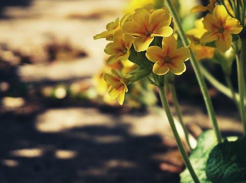 Ilmainen kuvapankkikuva tunnisteilla esikko, jousi, kasvit, keltaiset kukat