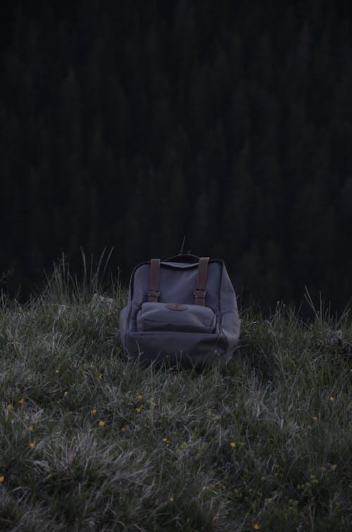 Kostenloses Stock Foto zu blätter, gras, pflanzen, rucksack