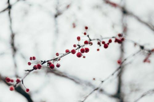 Foto d'estoc gratuïta de arbre, branca, constipat, gebre