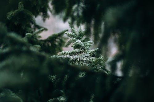 Foto stok gratis alam, berbayang, cabang, embun beku