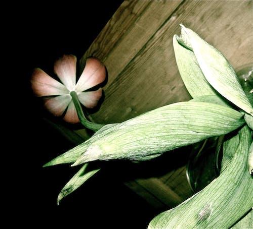 bakış açısı, çiçek, kök içeren Ücretsiz stok fotoğraf