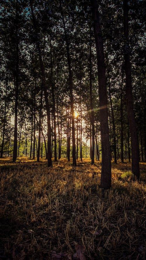 4k 바탕화면, 나무, 미스터리, 선신의 무료 스톡 사진