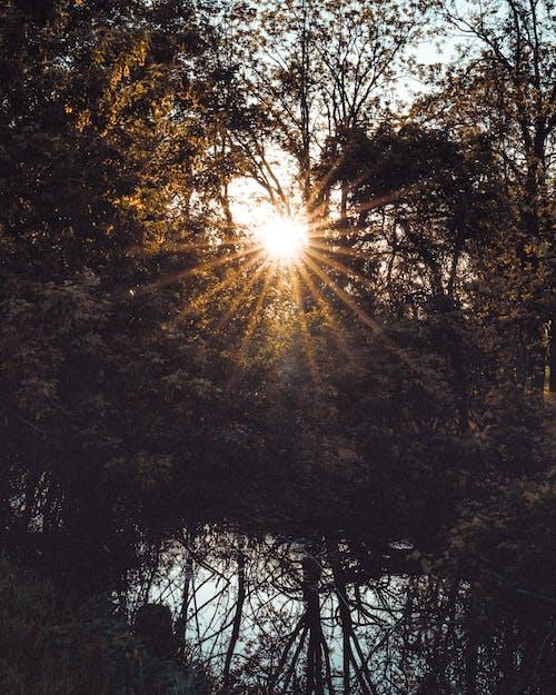 คลังภาพถ่ายฟรี ของ กลางวัน, กลางแจ้ง, ซันเรย์, ดวงอาทิตย์