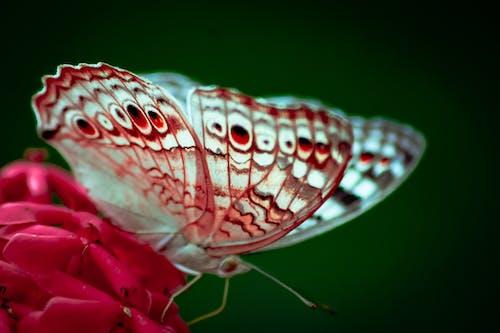 Fotos de stock gratuitas de Fondo de pantalla 4k, fondo de pantalla de amor, fondo de pantalla de colores, mariposa en una flor