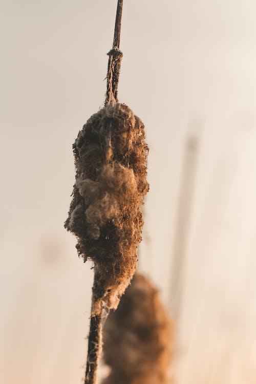 Ingyenes stockfotó barna, bolyhos, gabona, gyár témában
