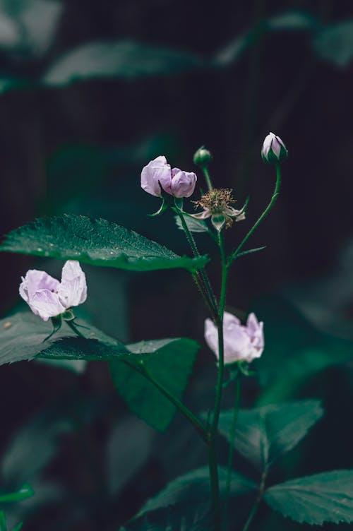 Fotos de stock gratuitas de flores, flores bonitas, flores en ciernes, hermosa flor