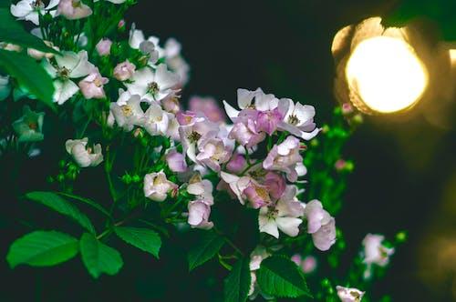 Fotos de stock gratuitas de flores, flores bonitas, Flores rosadas, jardín de flores