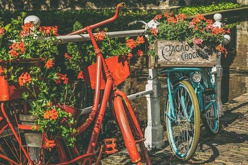 açık hava, Antik, antika, Bahçe içeren Ücretsiz stok fotoğraf