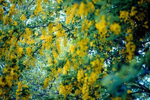 Fotobanka sbezplatnými fotkami na tému kvety, príroda, zelená, žltá