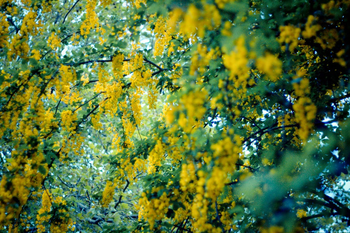 ดอกไม้, ธรรมชาติ, สีเขียว