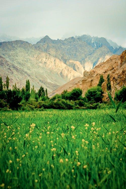 Fotobanka sbezplatnými fotkami na tému divý, Himaláje, hory, India