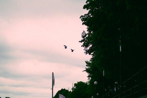 Безкоштовне стокове фото на тему «блакитне небо, Гамбург, дерево, місто»