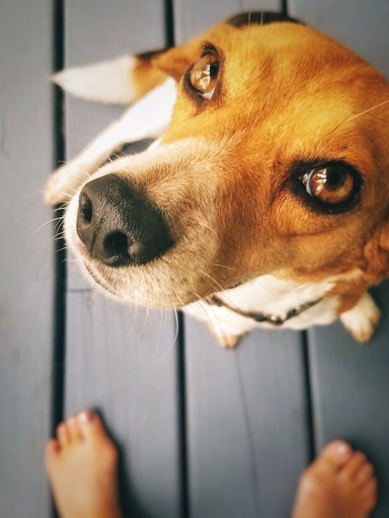 Close Up Photo of Short-Coated Dog