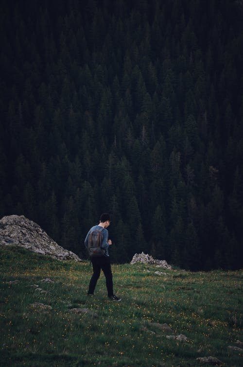 Fotos de stock gratuitas de al aire libre, arboles, aventura, caminando