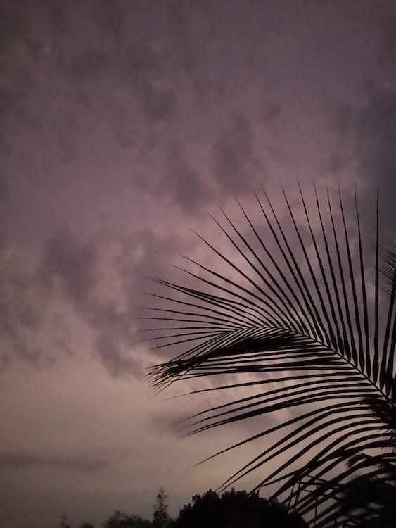 jabloň, kokos, mrak