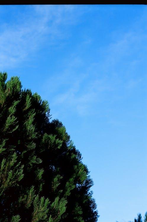 albero, all'aperto, ambiente