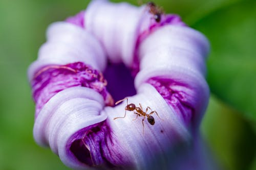 Selective Focus Photo of Ant on Purple Flower