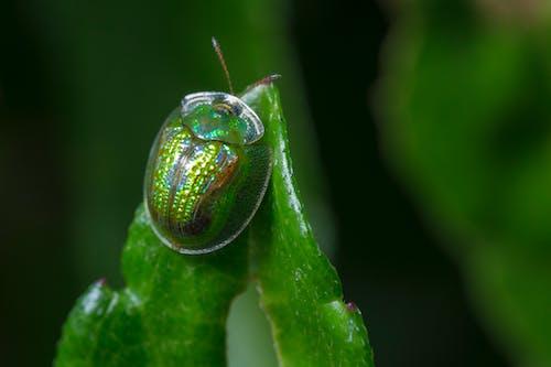 Gratis arkivbilde med bille, biologi, blad, dyreliv