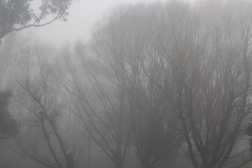 Kostenloses Stock Foto zu nebelige landschaft