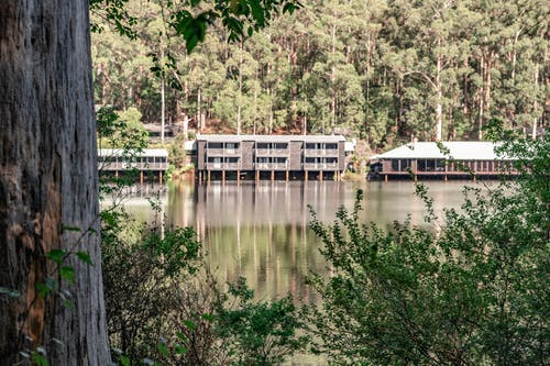 Kostnadsfri bild av eukalyptusträd, gröna buskar, ljusreflektioner, lugnt vatten