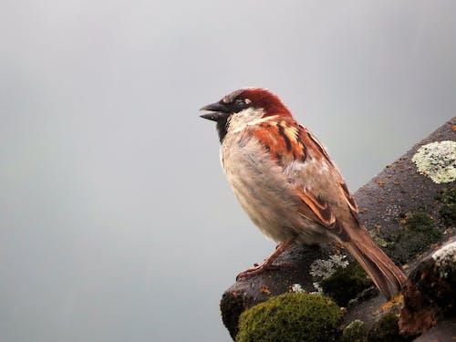 Free stock photo of small bird