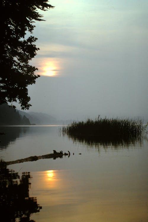 Free stock photo of evening sun