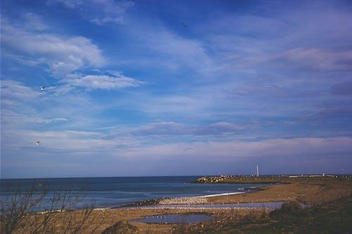 Gratis arkivbilde med blå himmel, dagslys, gress, hav