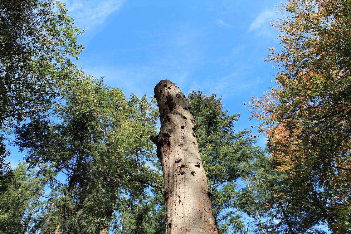 blue sky, dead tree, green