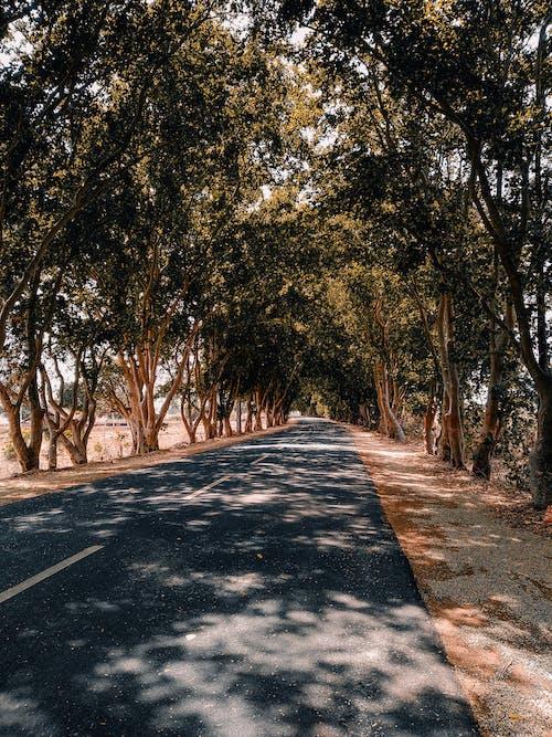 Photos gratuites de arbres, asphalte, autoroute, espace extérieur