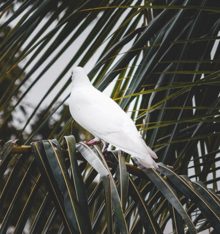 Back View Photo of White Dove Perched on Palm Tree Branch
